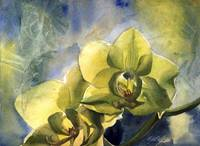 yellow orchid with blues