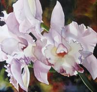 light pink cattleya