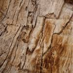 """Texturized wood bark"" by AngelaStanton"