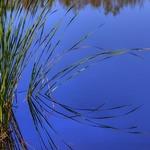 """Sawgrass (IMG_0020)"" by jvandyke"