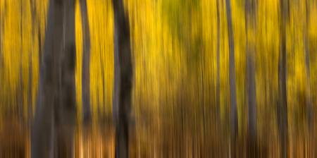 Golden Autumn Woods