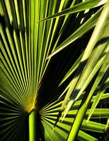 PALM TREE - Green, Macro, Botanical Still Life