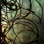 """tangled..."" by LouMcGill"