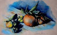 Still Life of Citrus and Little Snail