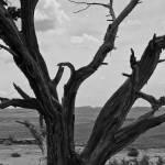 """Utah Tree"" by RM84e"