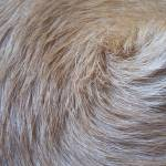 """Fur Whorl"" by Kindurco"