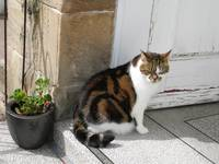 Suki  on the doorstep