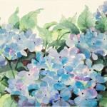 """""""Blue Hydrangea"""" by SharonRMorgio"""
