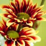 """Fresh Flowers"" by PsyonicStudios"