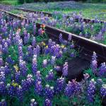 """Bluebonnet Rails"" by Inge-Johnsson"