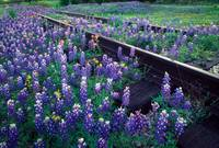 Bluebonnet Rails