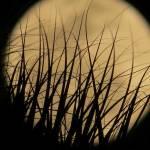 """full moon through palm tree"" by Zinastr"