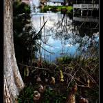 """Magnolia Park"" by ChrisCrowley"