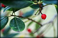 Dew on Berry