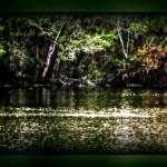 """""""Wilderness at DeLeon Springs"""" by ChrisCrowley"""