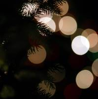 lights blure - bokeh -with evergreen branches