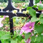 """Cheerful Vine"" by secondglance"