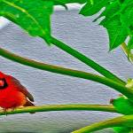 """""""Red Cardinal"""" by lifescaping"""