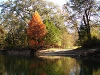 Chipola River Fall 001