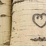"""Love on a tree"" by PronghornPix"