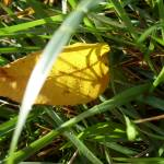 """Autumn Tone"" by littlechanges"