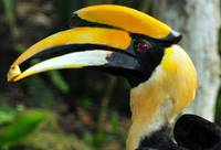 Hornbill: Bird of a Different Feather