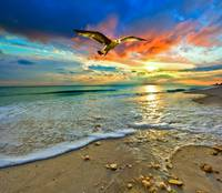 Red Sunset Green Sea Hawk Florida Beach Art Prints