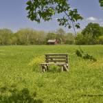 """Bench in Field"" by awsheffield"
