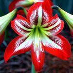 """Floral Macro"" by waynelogan"