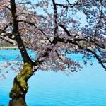 """""""Dancing Tree"""" by esteemededww"""