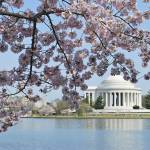 """""""Over Looking the Thomas Jefferson Memorial"""" by esteemededww"""