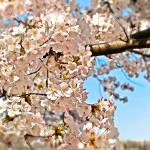"""Spring April"" by esteemededww"