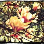 """Dark Flower"" by esteemededww"