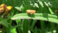 Orange Insect Eggs Plant Bug Animal Creature Wild