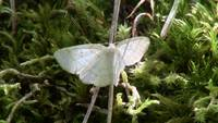 White Butterfly Insect Bug Animals Creatures Wild