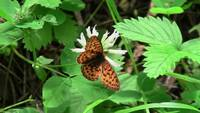 Orange Butterfly Insect Bug Animal Creature Wild
