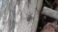 Grey Insect Arachnid Spider Bug Animal Creature