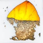 """Mushroom"" by micro"