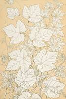 Leaves from Nature, 1868