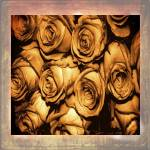 """Rustic Roses.."" by ChandaMathur"