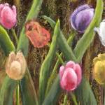 """""""Tulip Garden"""" by VicMastis"""