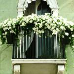 """White Petunia Balcony"" by DonnaCorless"