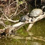 """""""Turtle Trio"""" by MagicalMemoriesStudios"""