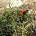"""Butterfly Garden"" by MagicalMemoriesStudios"