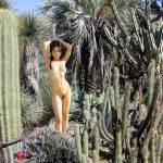 """Cactus Garden"" by mlidikay"