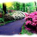 """botanical scenes"" by frankreggio"