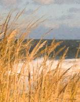 Grass on the Dunes