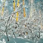 """Snowy Web"" by nostalgiawest"