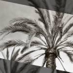 """La Jolla Palms"" by CR8ONM"