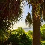 """""""palms"""" by bawhiddon1"""